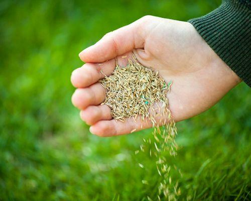 Grass Seed and Fertilizer