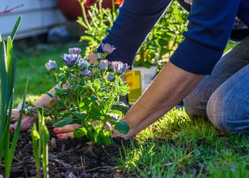 Mulch 101: Planning, Landscaping and Maintenance