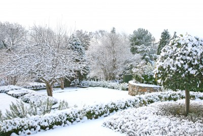 Canadian backyard in the winter with trees and bushes covered in snow.