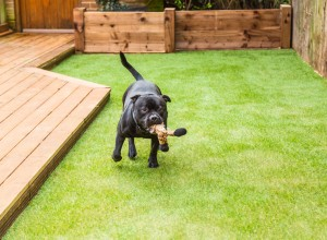 Artificial grass with a dog playing on it.