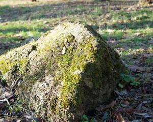 Mossy Boulders
