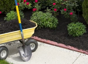 Wheelbarrow being used to distribute black mulch.