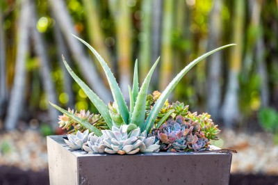 Outdoor succulent planter.
