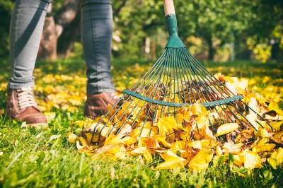Woman raking the leaves.