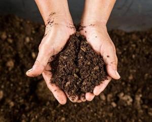 Soils (Triple Mix)
